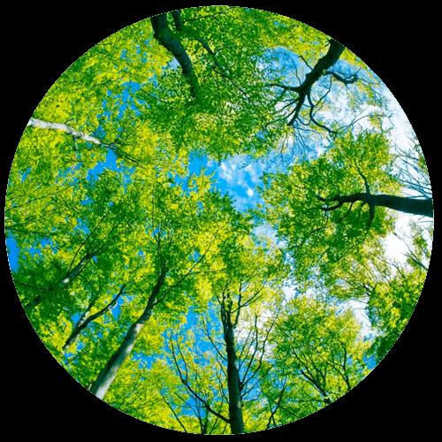 potatura alberi alto fusto monza brianza